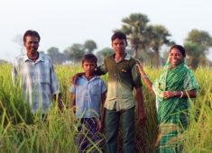 Familie aus Bangladesch steht in ihrem Reisfeld