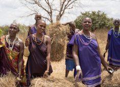 Masai-Frauen am Feld