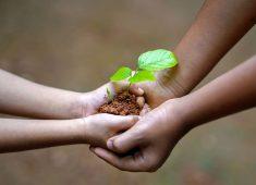 4 Hände die eine kleine Pflanze halten